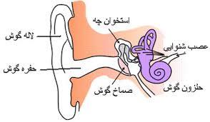 تحقیق در مورد گوش