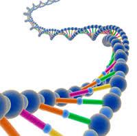مقاله درمورد DNA و ژنتیک