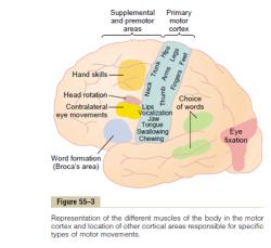 پاورپوینت فیزیولوژی اعصاب
